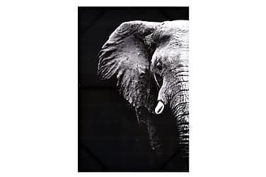 Bilde Elefant