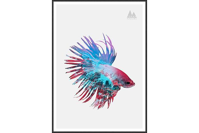 Bilde Fighting Fish 50x70 cm - Flerfarget - Innredning - Veggdekorasjon - Bilder & kunst