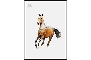 Bilde Horse 50x70 cm