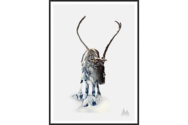 Bilde Reindeer 50x70 cm