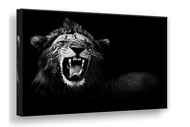 Bilde Canvas Lion 75x100 cm