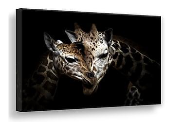 Bilde Wild Giraffes Lerret