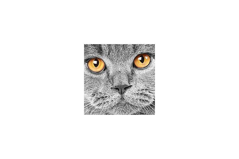 Canvasbilde Dekorativ - Flerfarget - Innredning - Veggdekorasjon - Lerretsbilder