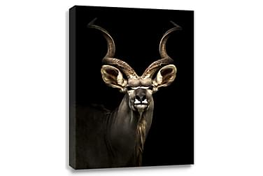 Digitalprintet Bilde Antilope Lerret