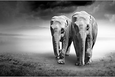 Kanvas Elephant 80x120 cm