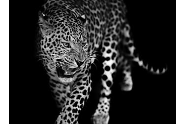 Kanvas Leopard 70x100 cm