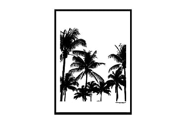 Poster Miami palms